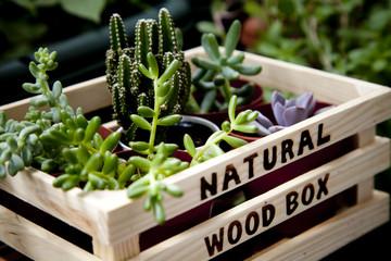 庭やベランダ、テラスから受ける気は、自分に足りない運気を補充してくれ、消耗した運気や生命力を補給させてくれます。